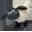 :sheep1: